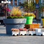 Jakie rośliny dla miejskich donic? Miniporadnik