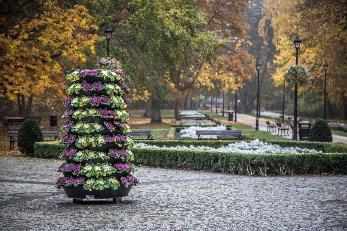 wieże kwiatowe kwietniki jesienne ukwiecenie świnoujście