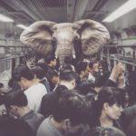 Uwaga, słoń wmetrze!
