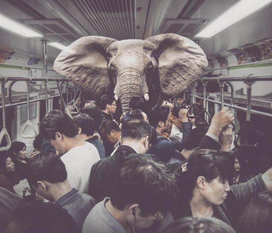 Uwaga, słoń w metrze!