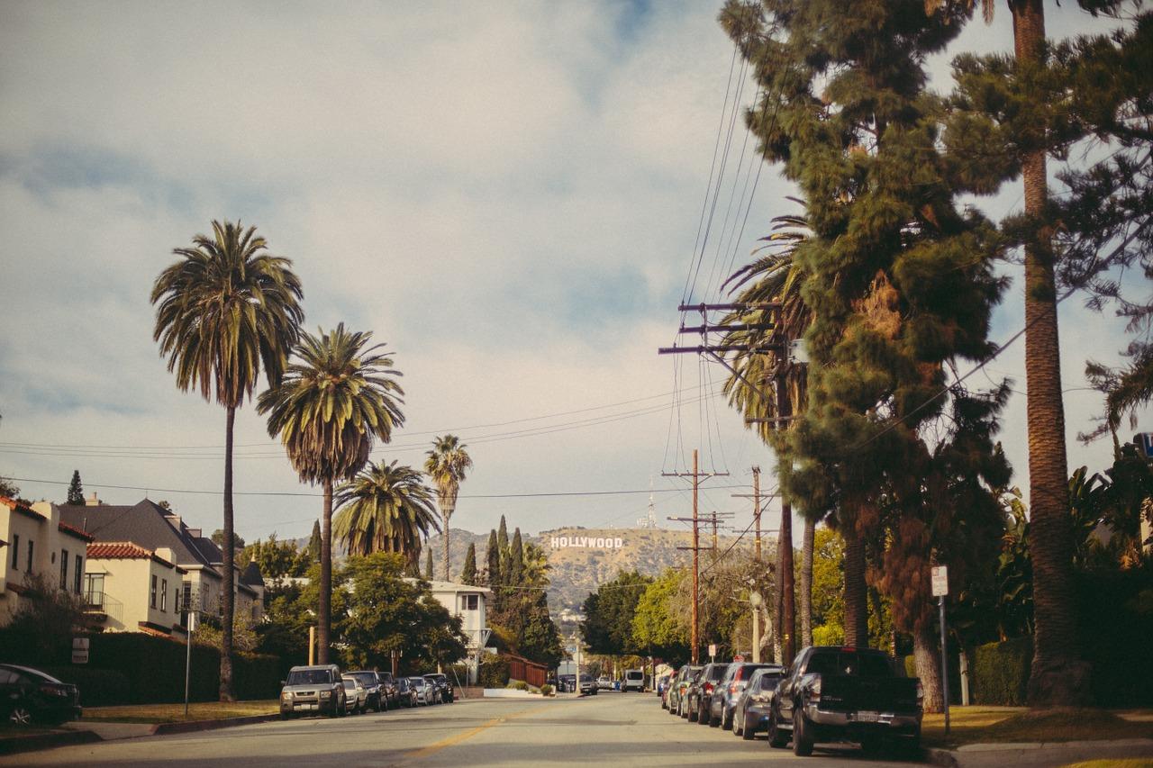 Drzewo – solidnie zakorzeniony symbol miasta
