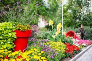 Kwiaty przed ratuszem. Roślinna oprawa budynków użyteczności publicznej