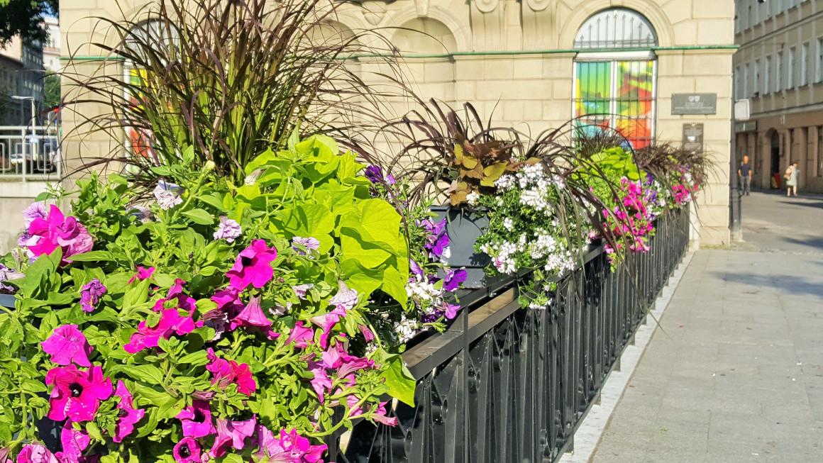 Kwiaty w mieście bajek