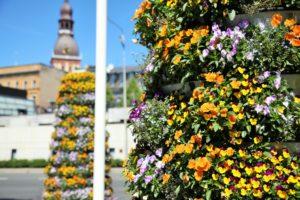 Ryga ukwiecona! Wieże kwiatowe w stolicy Łotwy