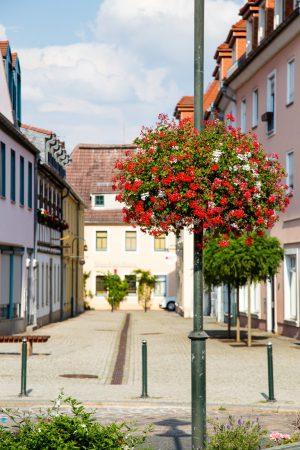 wiszące kwietniki terra group zieleń miejska 19 Wilsdruff niemcy