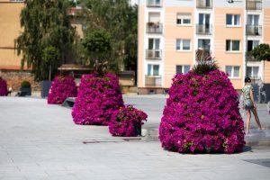 Raz na placu, raz na skwerze – wieże kwiatowe są mobilne!