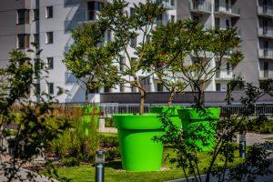 Ekspert: drzewa w miastach mogą tworzyć enklawy czystego powietrza