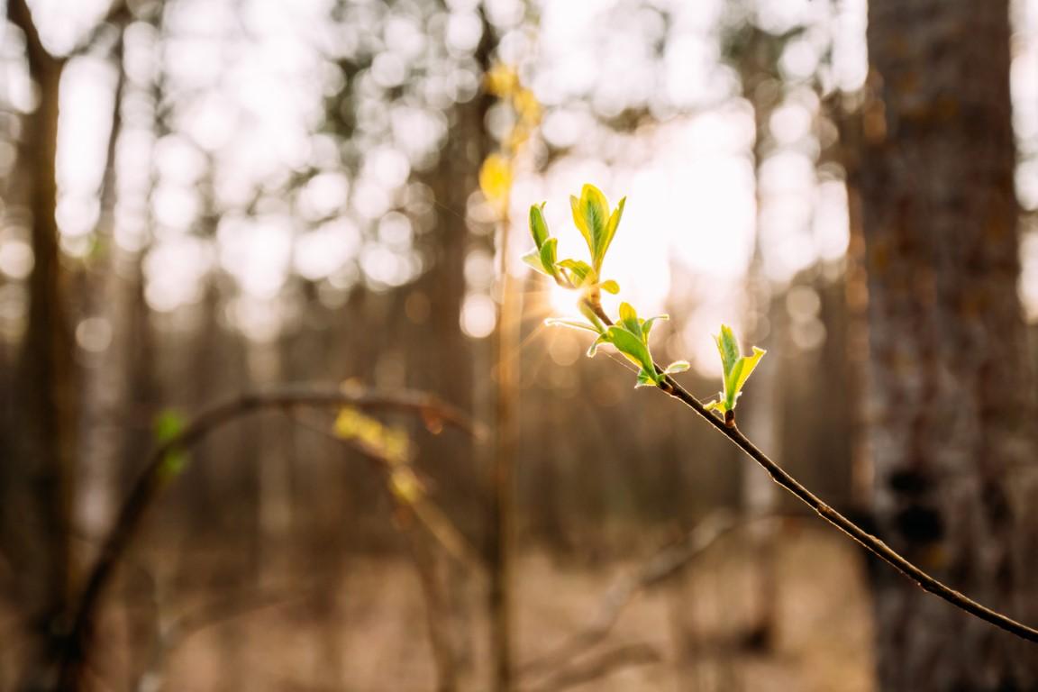 hydrogel-w-leśnictwie-jesienne-nasadzenia-lasów-