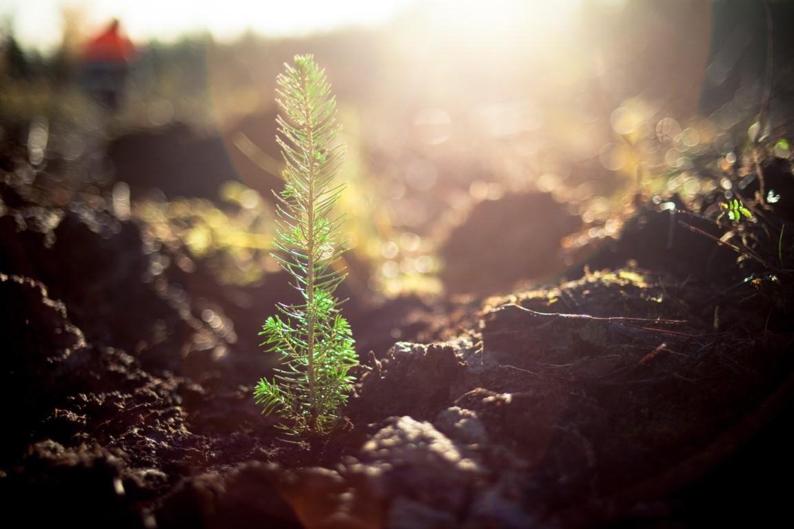 Październik – czas na jesienne odnawianie lasów