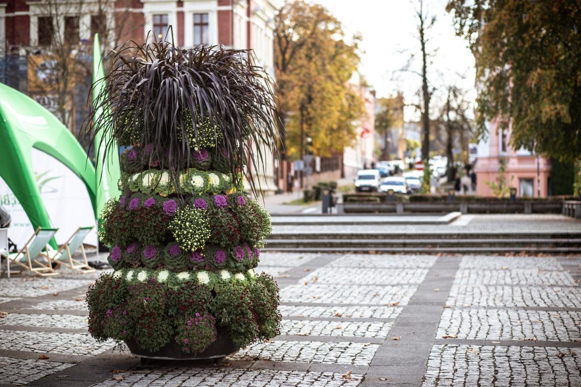 jesienne nasadzenia wieże kwiatowe kwietniki miejskie jesienne nasadzenia (18) zielona góra