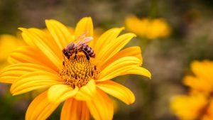 Adoptuj pszczołę… dla klimatu! Ruszyła siódma edycja akcji Greenpeace
