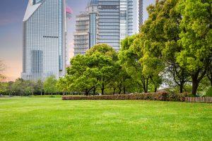 Ekspertka: najbardziej cennym elementem zieleni miejskiej są drzewa