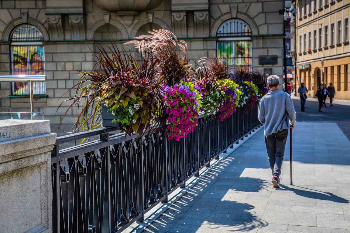 Potwierdzono, że zieleń w mieście sprzyja samopoczuciu mieszkańców