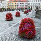wieże kwiatowe kwietniki miejskie terra trzebnica 11