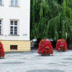 wieże kwiatowe kwietniki miejskie terra trzebnica 8