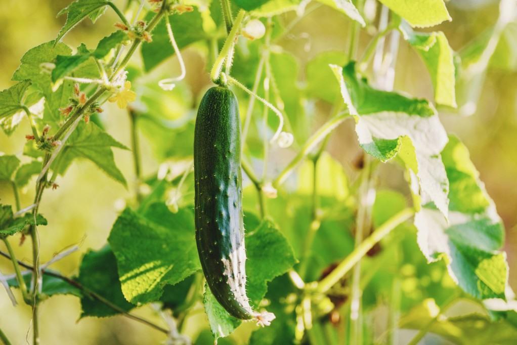 Lato w ogrodzie. Co sadzimy w czerwcu?