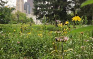Miejskie ogrody i działki to oaza dla pszczół