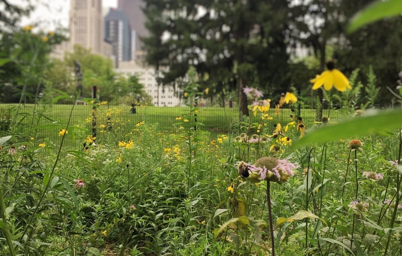 Miejskie ogrody i dzialki to oaza dla pszczol