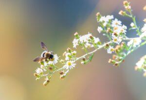 Pszczoly-i-zapylacze-zagrozone-na-calym-swiecie-w-tym-w-Europie-Zachodnie