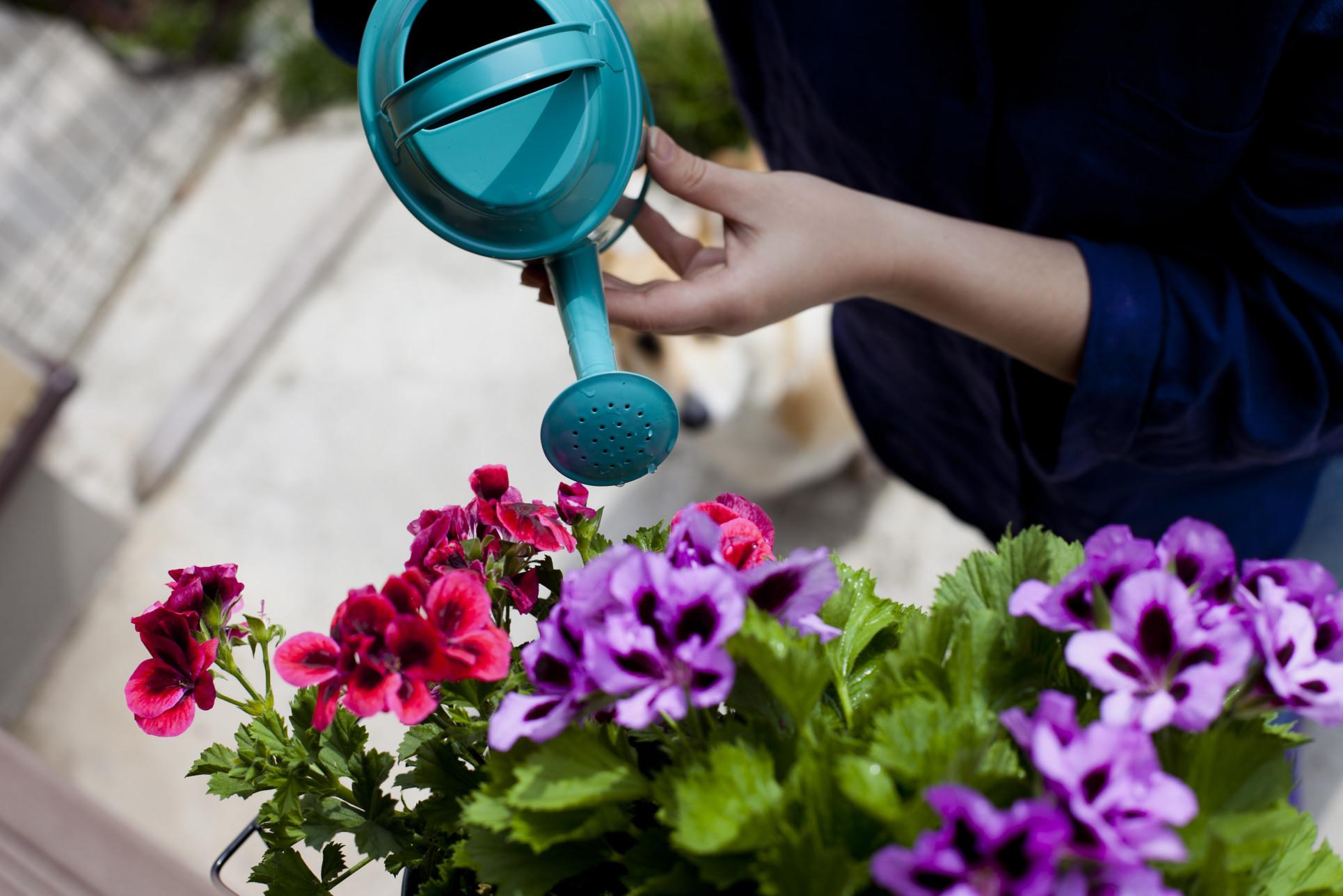 Wybierz idealne rośliny na balkon