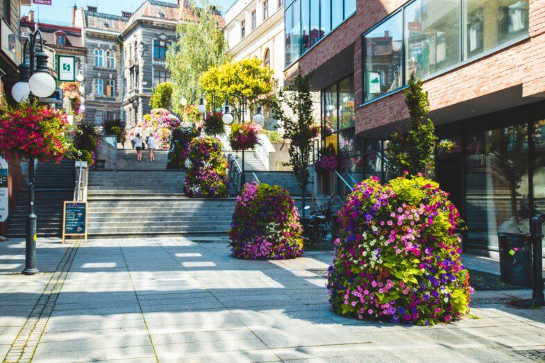 bielsko biala terra flower power lawki miejskie wieze kwiatowe 5