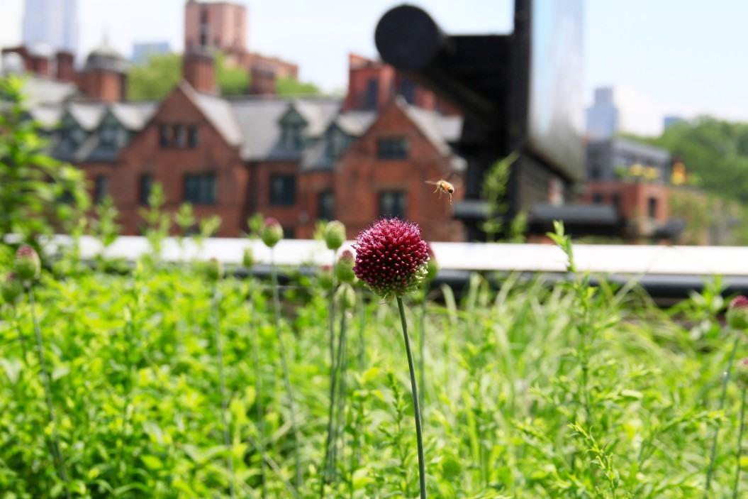 co nam po pszczołach pszczoły w mieście inspirowani naturą