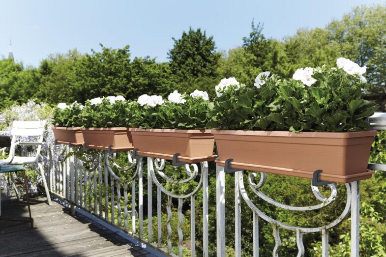 jakie-kwiaty-na-balkon