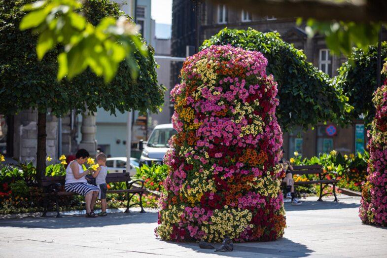 kolorowa-ozdoba-miejska-kwiaty-w-miescie-autor-UM-Bielsko-Biala