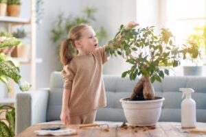 latwe-domowe-sposoby-na-zdrowe-kwiaty-doniczkowe