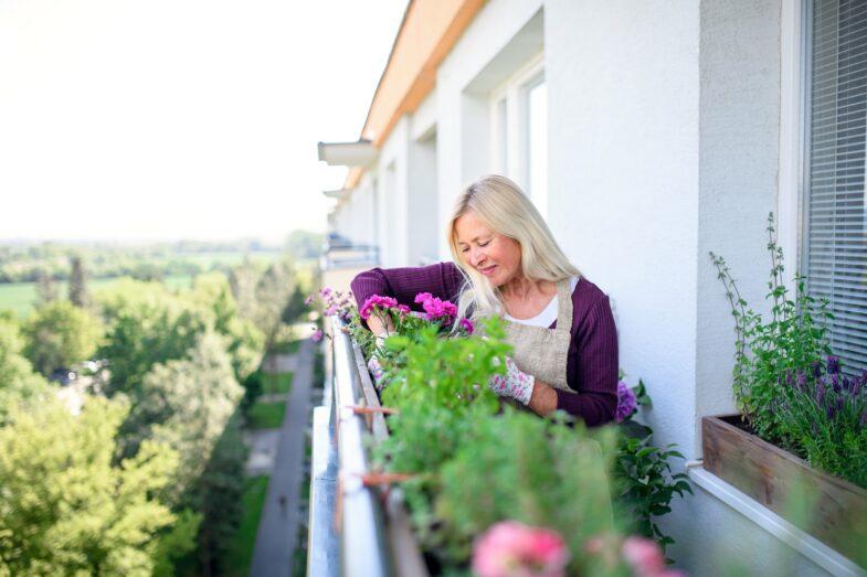 pelargonia-kwiaty-na-balkon