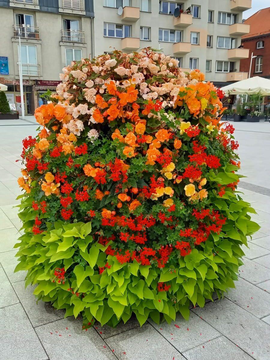 piramida-z-kwiatami-ozdoba-miejska-autor-renata