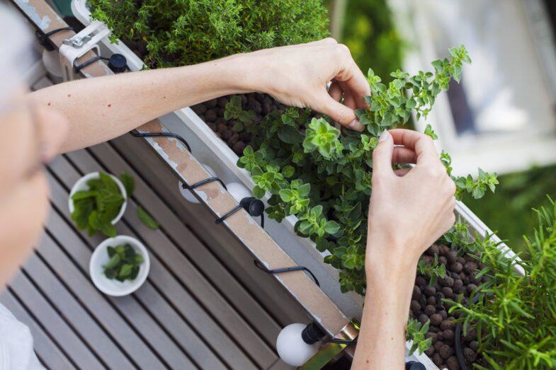 ziola-na-balkonie-przepis-na-smaczne-potrawy